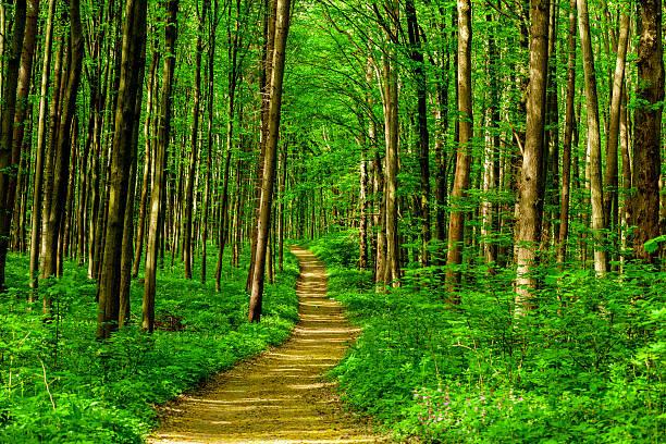 植树节,不只是种树那么简单